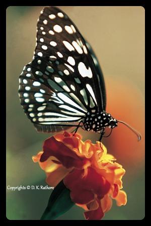 Amateur Photographer Cover by D. K. Rathore