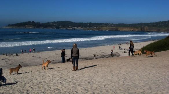 doggie beach s