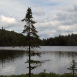 The Call of the Wild – Algonquin Park