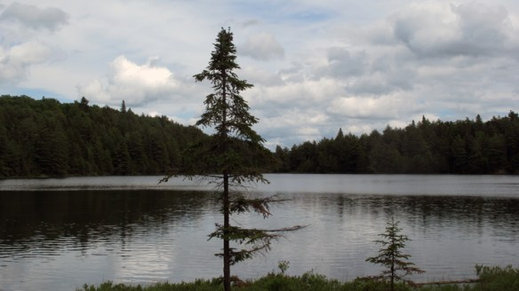 It's not hard to see why a lone jack pine like this one inspired Tom Thomson.