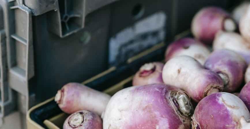 fresh turnip for food week july12