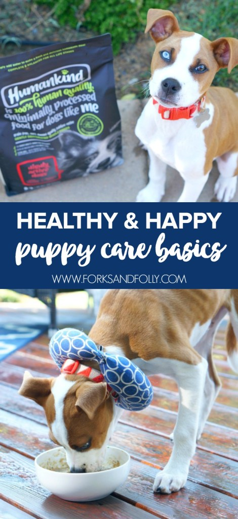 Having a puppy can be a lot of work! Be sure to review these puppy care basics to ensure you have everything you need for a smooth start with your new dog.