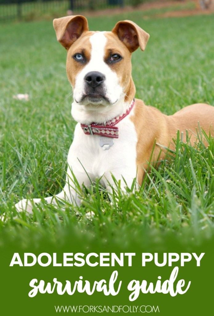 Has your sweet pup gone from cuddle monster to four-legged monster? Click through to find out our Adolescent Puppy Survival Guide tips.