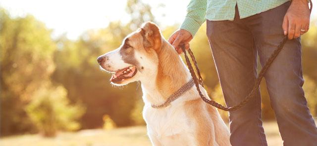 Curso de Adiestramiento Canino Gratis