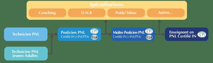 Organigramme Formation PNL Psynapse