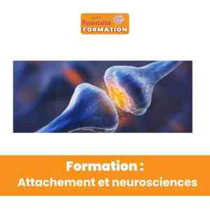 Attachement et neurosciences