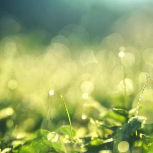 nature, lumière et flou