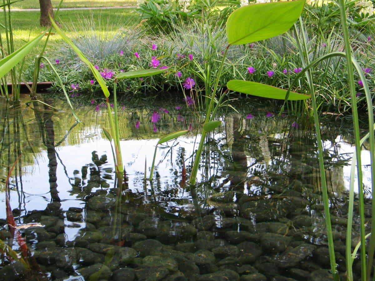 I benefici delle piante acquatiche forme d 39 acqua for Stagno artificiale per tartarughe