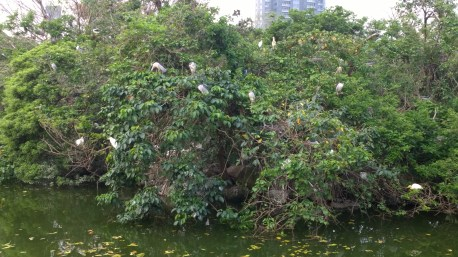 The wild bird islands in lake of Da-An Forest Park.