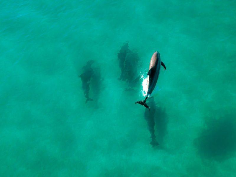 10 choses à savoir sur les dauphins