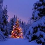 Los Secretos del Árbol de Navidad [que debes pasar por alto]