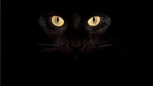 ojos-de-gato-negro