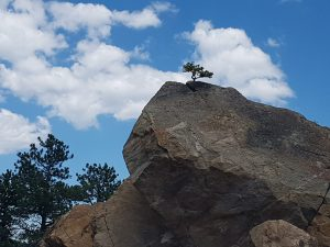 A small tree emerges from a boulder.