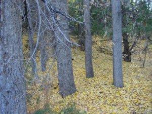 Autumn leaves on forest floor