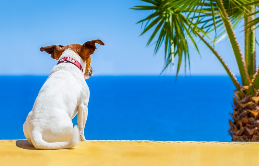 Dog enjoying the summer views from a Fort Lauderdale pet friendly condo