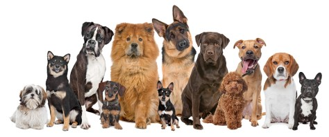 Fort Lauderdale Pet Friendly condo rules change for different types of dogs
