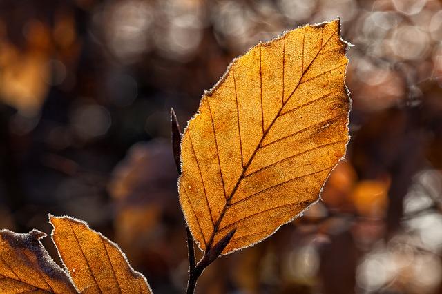 Leaf Update