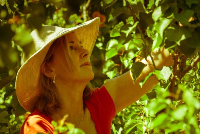 Lisa's Apricot Tree