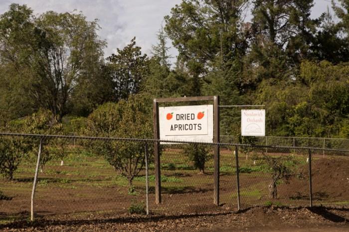 Novakovitch Orchards