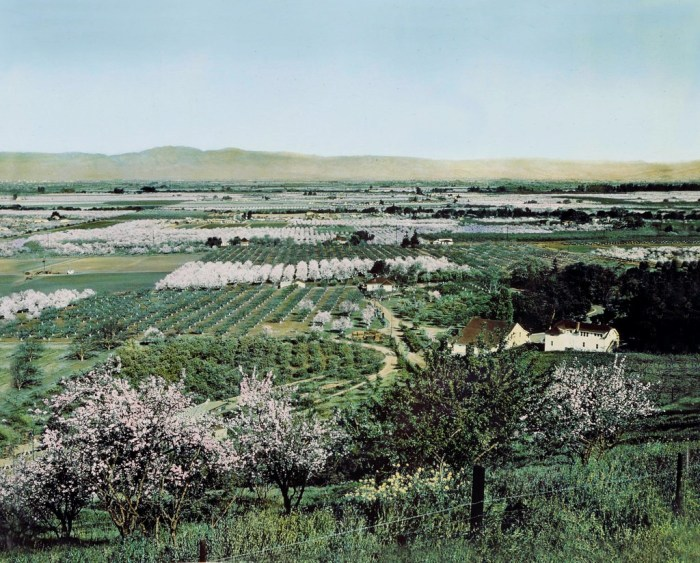 Historic Santa Clara Valley Blossoms