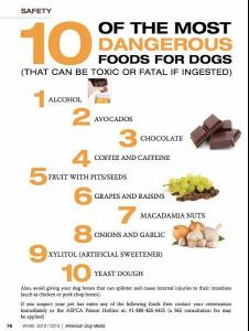 10 Dangerouse foods for dogs