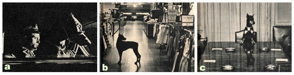 Photographed by Bob Lerner for Look Magazine Sept. 21, 1954 | Doberman History | Macy's Security
