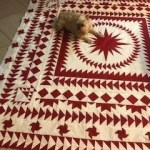 paper pieced quilt, circling geese quilt, red and white quilt, medallion quilt