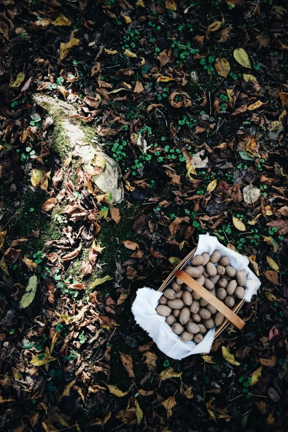 Pecan Picking | for the love of the south