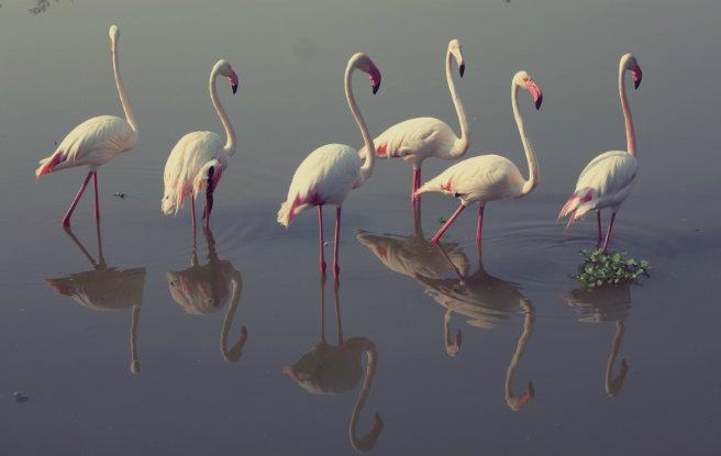 Ungulates-Safari-Park-Flamingos-2