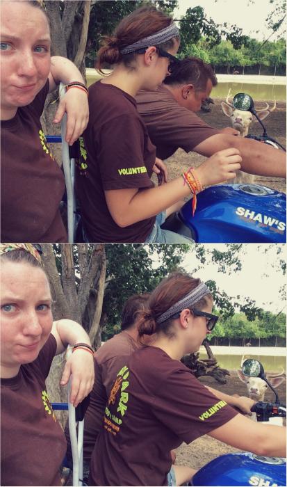 Ungulates-Safari-Park-Salapong-Teaching