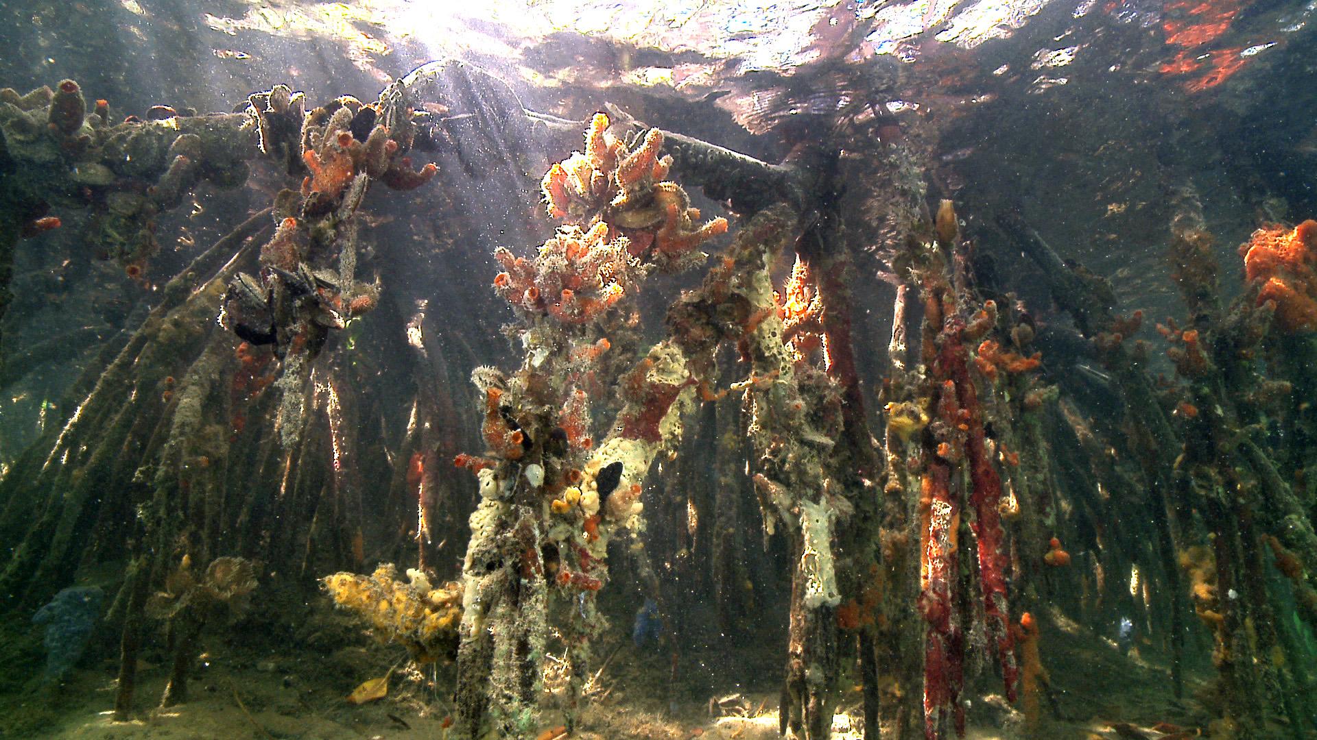 Mangrove PR