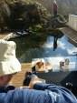 Første utedag ved dammen denne våren/ First day at the pond this spring