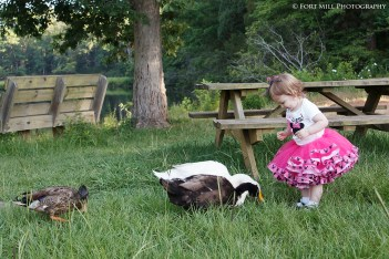 Toddler Feeding Ducks