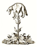 Vegetable-lamb