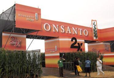 MONSANTO. Fallo europeo dio no ha lugar a un pedido de la comercializadora de semillas.
