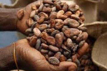 Cote d 'Ivore Exports