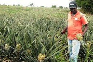 Investment Opportunities in Ghana