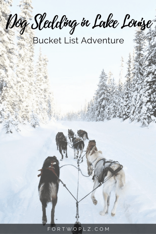 Looking for adrenaline pumping adventure in Lake Louise? Try dog sledding when visiting Banff in winter!