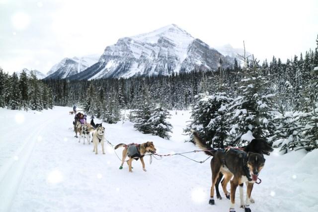 Dog Sledding in Lake Louise, Banff National Park