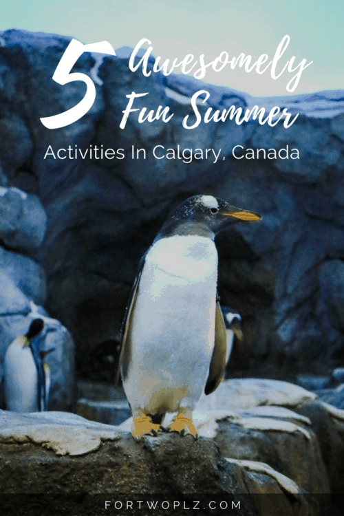 Summer is here and adventure is calling. Wondering what you can do in Calgary? Here are the 5 top activities!