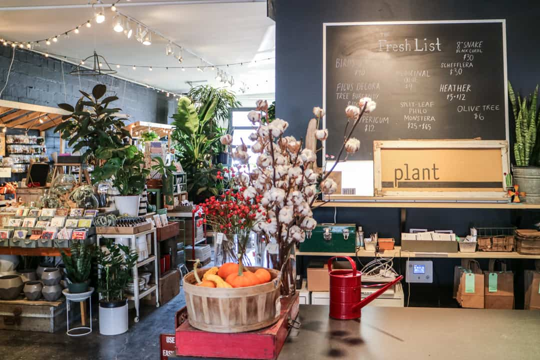 Plant in Inglewood, Calgary