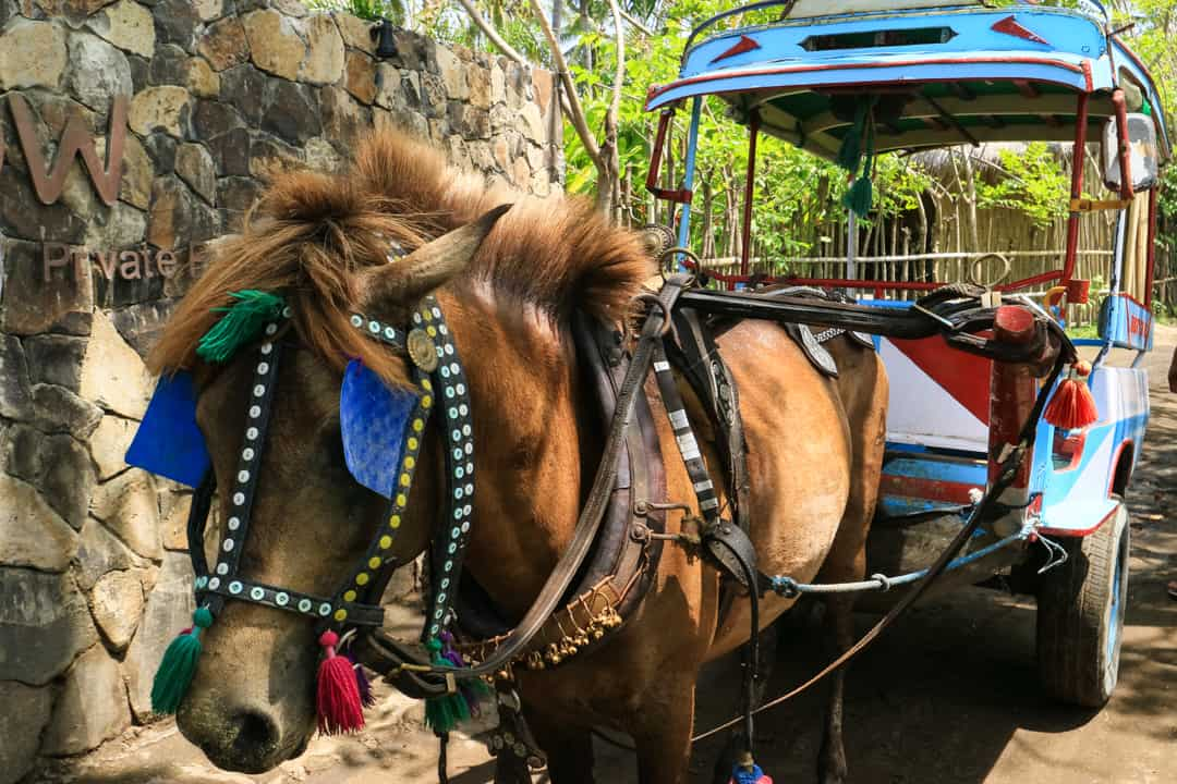 Horse Cart on Gili Air Lombok Indonesia