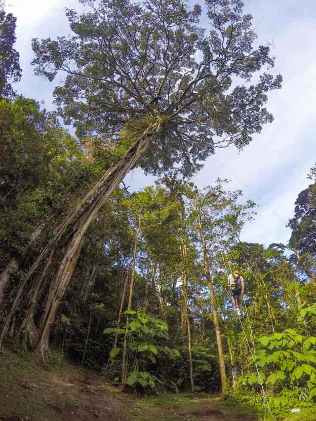 Unforgettable things to do in Costa Rica in November treetop climbing