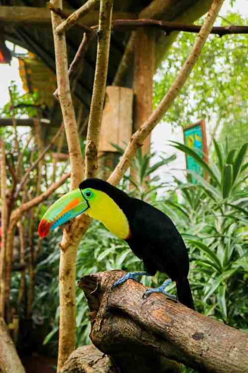 Unforgettable things to do in Costa Rica in November La Paz Waterfall Gardens