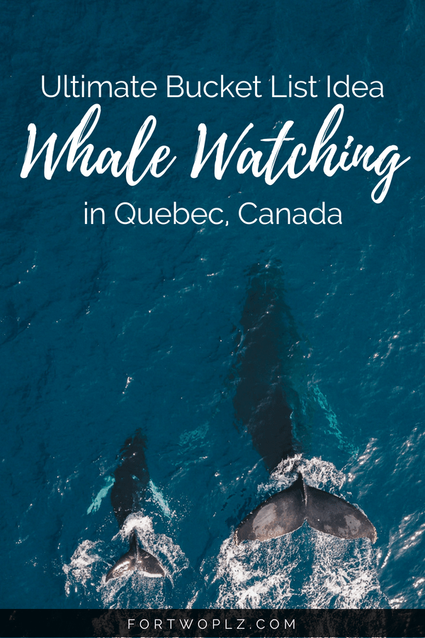Whale watching is one of the best things to do in Quebec, Canada. Want to know the best spots to meet whales? Which whales you will see? And the best season for it? Check this post for everything you need to know to plan an epic whale watching adventure in Tadoussac, Quebec. #travealcanada #travelguide #tripplanning #traveltips #quebec #itinerary #thingstodo #adventuretravel #nature #wildlife #whalewatching #beluga #whales #humpback #humpbackwhales #belugawhale #bucketlist #traveldestinations #wanderlust #roadtrip