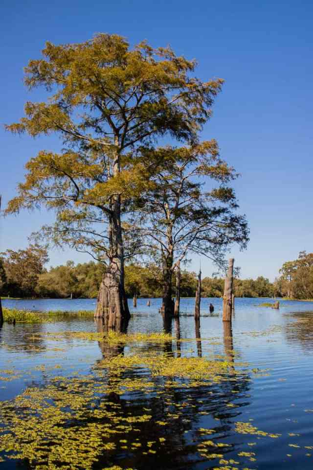 Airboat Swamp Tour Lafayette Louisiana