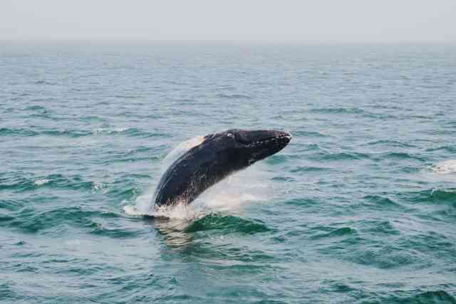 Whale watching Bar Harbor Maine