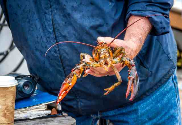 Lobster fishing 36 hours in portland maine