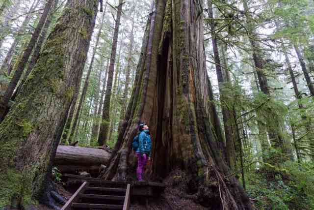 Avatar Grove Port Renfrew Canada