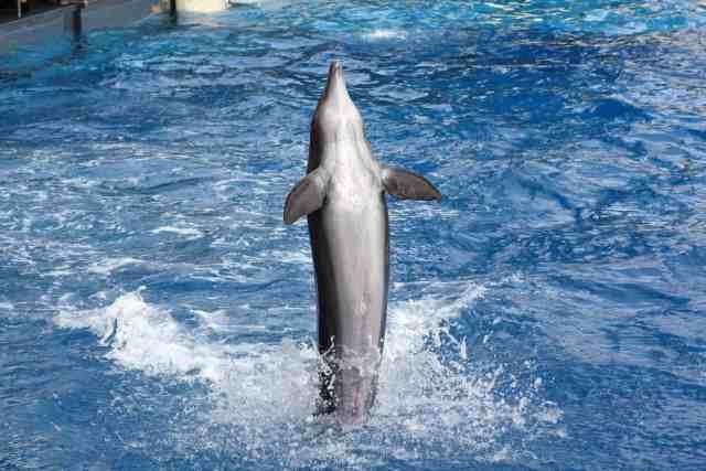 Dolphin Swim Florida Keys